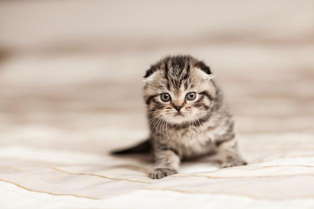 Gestreiftes kleines kätzchen, das auf einem plaid sitzt