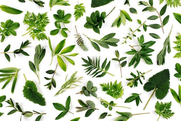 Gestyltes grünes blattmuster. abwechslungsreiches waldgras und blätter auf weißem hintergrund.