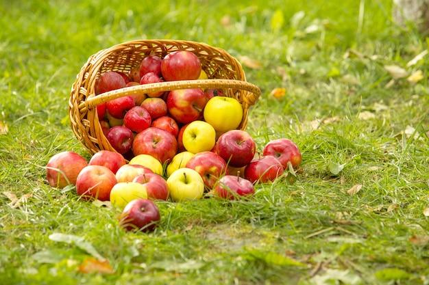 Gesunde bio-äpfel im korb auf grünem gras im sonnenschein