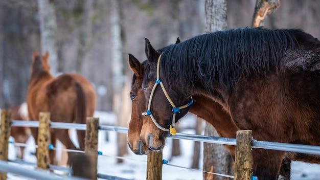 Gesundes pferd im stall
