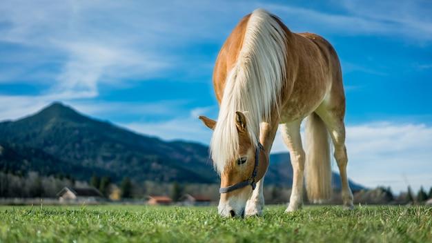 Gesundes pferd in einem weide-porträt