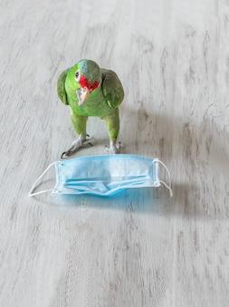 Gesundheit der grünen papageien und medizinische einwegmaske. gesundheitskonzept.