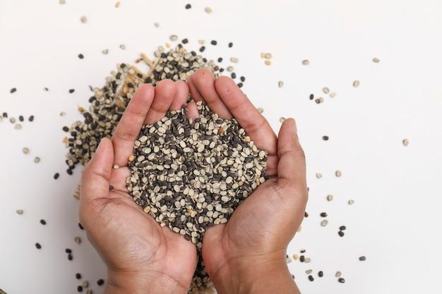 Geteilte schwarze linse auch bekannt als schwarzes gramm, schwarzer urad dal, vigna mungo, urad bohne in der hand