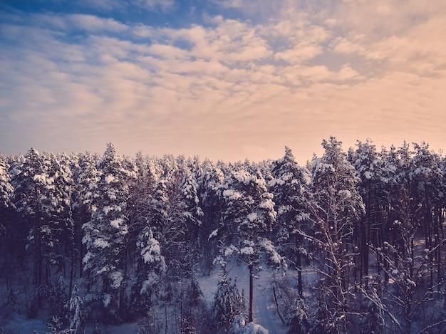 Getönter dunkler winterwald kreuzung und bäume im schneeblauen himmel mit wolken im hintergrund