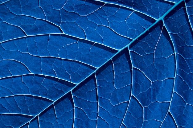 Getöntes blaues blatt mit großen pflanzenadern. natürlicher hintergrund