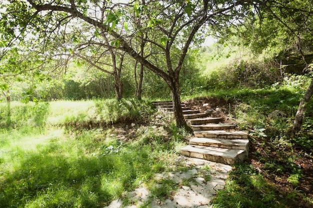 Getöntes foto von schönem garten mit bäumen und steinweg