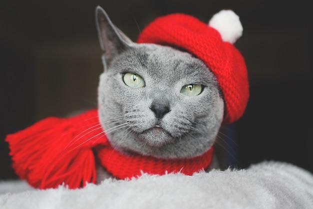 Getöntes porträt einer russischen blauen katze im eleganten roten hut und im schal auf dunklem hintergrund.