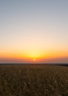 Getreidefelder bei sonnenaufgang