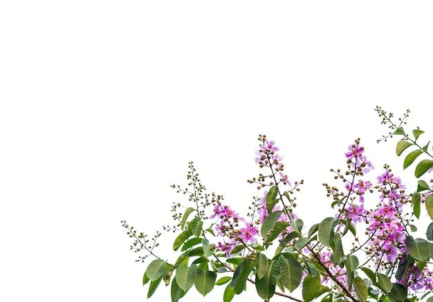 Getrennt vom schönen baumast mit buntem blatt auf weißem hintergrund. beschneidungspfad und kopie raum- bild.