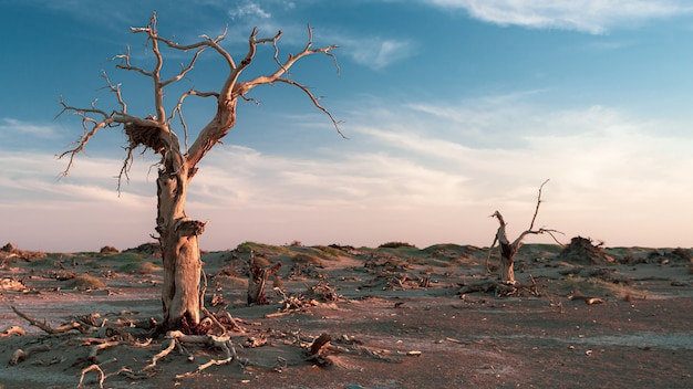 Getrocknete bäume in einem toten wald, die tagsüber gefangen wurden