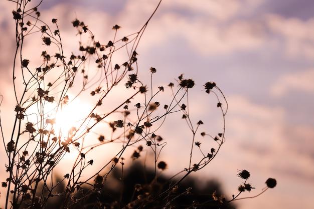 Getrocknete blumen auf einem sonnenuntergangshintergrund