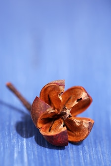 Getrocknete dekorative blume auf farbiger holztischoberfläche