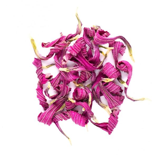 Getrocknete echinacea-blüten isoliert