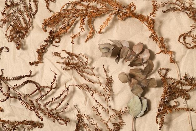 Getrocknete farn- und eukalyptuszweige auf braunem papier