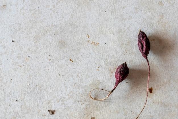 Getrocknete gemüse-radieschen auf dem betonboden flach liegen minimalistischer und moderner kunsthintergrund