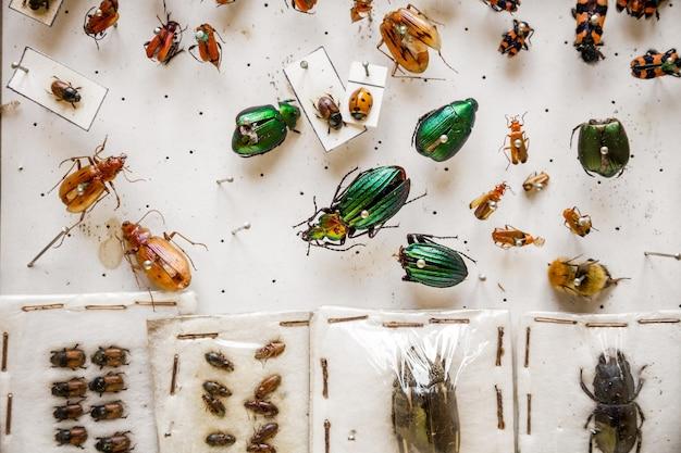 Getrocknete insektensammlung auf weißem hintergrunddisplay