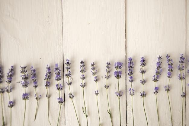 Getrocknete lila botanische blumen des lavendelfeldes. herbarium. flach liegen