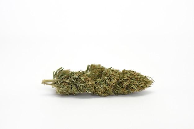 Getrocknete medizinische marihuana-blume auf weißer wassermelonensorte