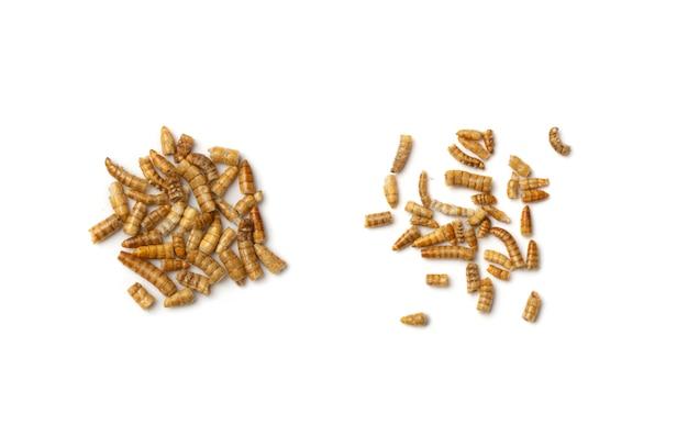 Getrocknete mehlwürmerlarven isoliert