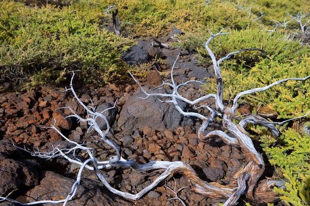 Getrocknete niederlassungen in la palma caldera de taburiente