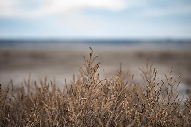 Getrocknete pflanze am ufer eines getrockneten sees. hintergrund. kopieren sie platz