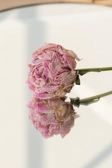 Getrocknete rosa pfingstrose auf einem runden spiegel