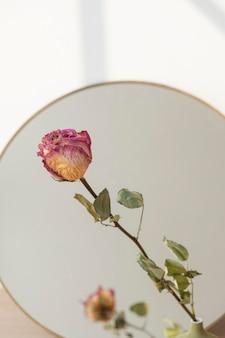 Getrocknete rosa rosenreflexion auf einem runden spiegel