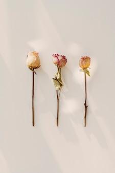 Getrocknete rosen auf einem weißen hintergrund flatlay