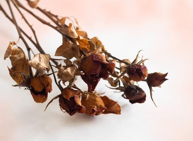 Getrocknete rosen mit dunkelbraunem blütenblatt und blättern aus dem alter, auf den hintergrund legen, verschwommenes licht herum