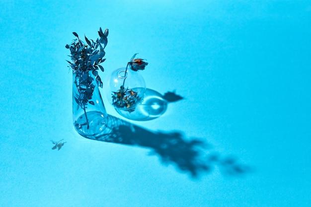Getrocknete rosenblume in blauer farbe einer runden glasvase und eines blauen zweigs