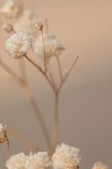 Getrocknete schleierkrautblüten makroaufnahme