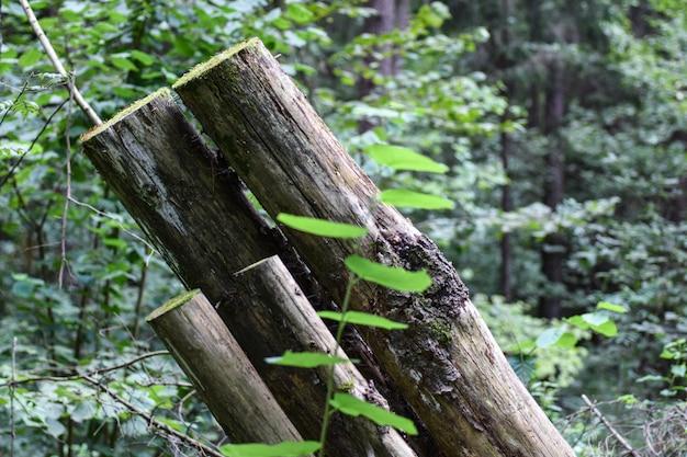 Getrocknete stämme von geschnittenen bäumen im wald