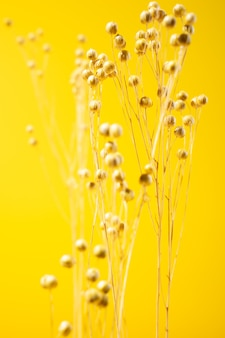 Getrocknete wilde gelbe blumen isoliert auf gelbem hintergrund