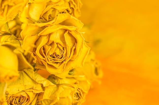 Getrockneter hintergrund der gelben rosen