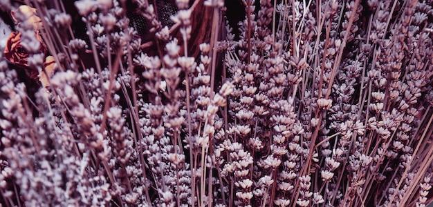 Getrockneter lavendelhintergrund