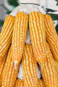 Getrockneter mais in der erntezeit
