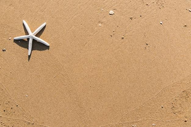 Getrockneter seestern auf dem strandhintergrund