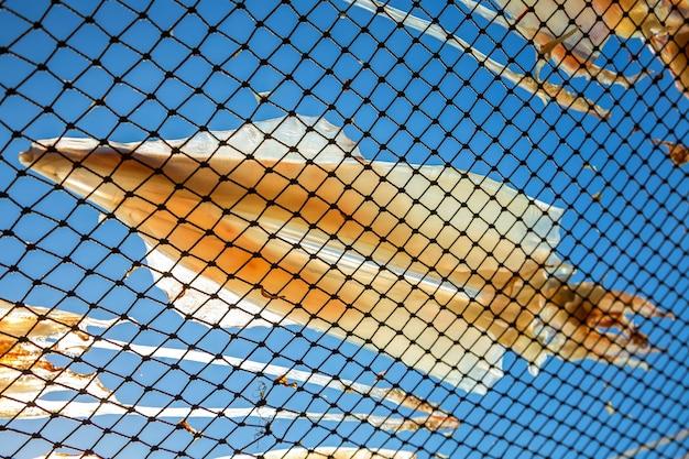 Getrockneter tintenfisch in thailand.