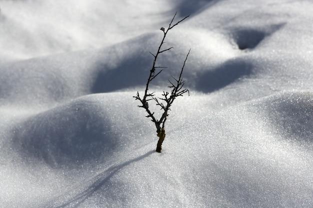 Getrockneter zweig einsamer baum metapher schnee winter dünen wüste