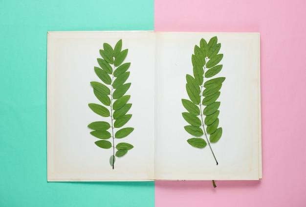 Getrockneter zweig mit grünen blättern in einem alten buch. herbarium