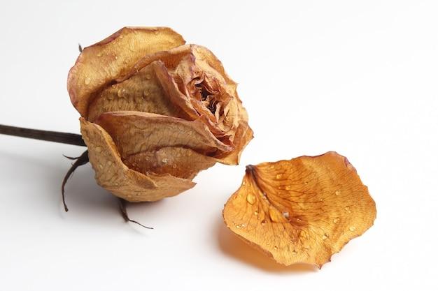 Getrocknetes rosenblatt in einem wassertropfen auf weiß