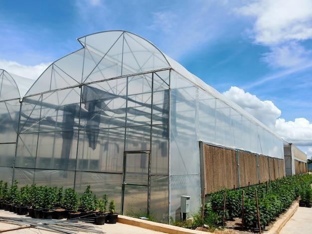 Gewächshäuser, die gemüse anbauen