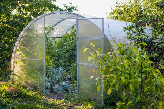 Gewächshaus. bio-lebensmittel. öffnen sie das gewächshaus mit tomaten mitten im gemüsegarten