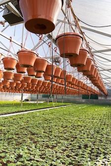 Gewächshaus-gewächshaus mit sämling wächst im pflanzenbau-landwirtschafts- und landwirtschaftskonzept