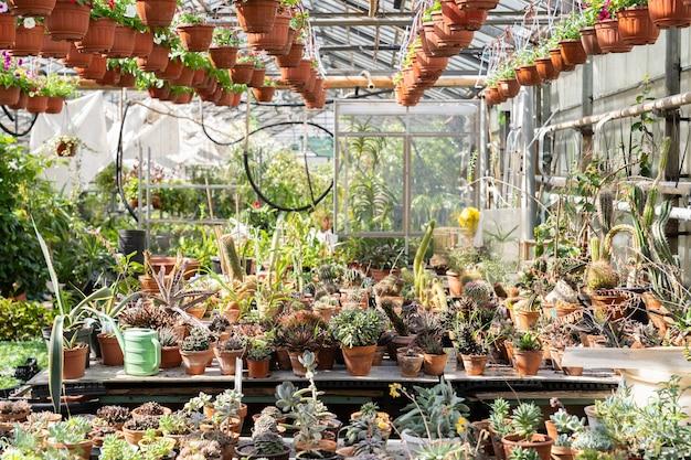 Gewächshaus mit wüstenpflanzen kaktus-sukkulenten wachsen in töpfen exotische zimmerpflanzen für den hausgarten