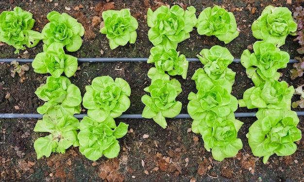 Gewächshaus und grünes gemüse