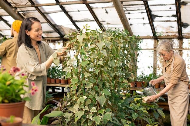 Gewächshausarbeiter unterschiedlichen alters pflegen pflanzen in schöner orangerie