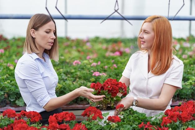 Gewächshausbesitzer präsentiert geranienblumen einem potenziellen kundenhändler.