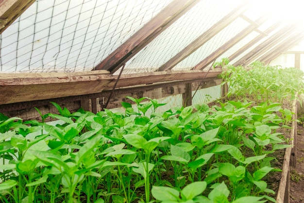 Gewächshausbewässerungssystem im einsatz