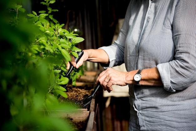 Gewächshausgartenarbeit mit werkzeugen